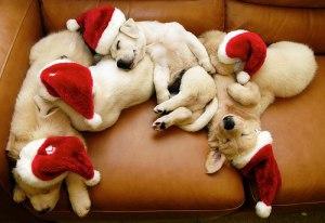 perros_navidad